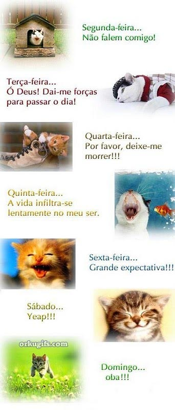 Vida de gato - Recados e Imagens para orkut, facebook, tumblr e hi5