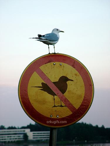 Proibido pássaros - Recados e Imagens para orkut, facebook, tumblr e hi5